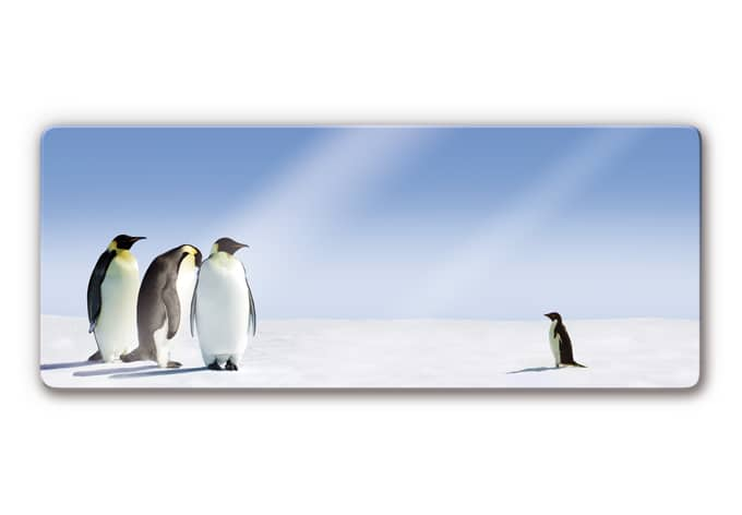 Glasbild Penguin - Panorama