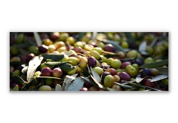 Hartschaum wandbild mediterrane oliven panorama wall - Mediterrane wandbilder ...