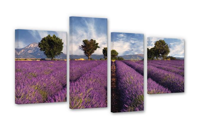Field of Lavender Canvas print (4 parts)