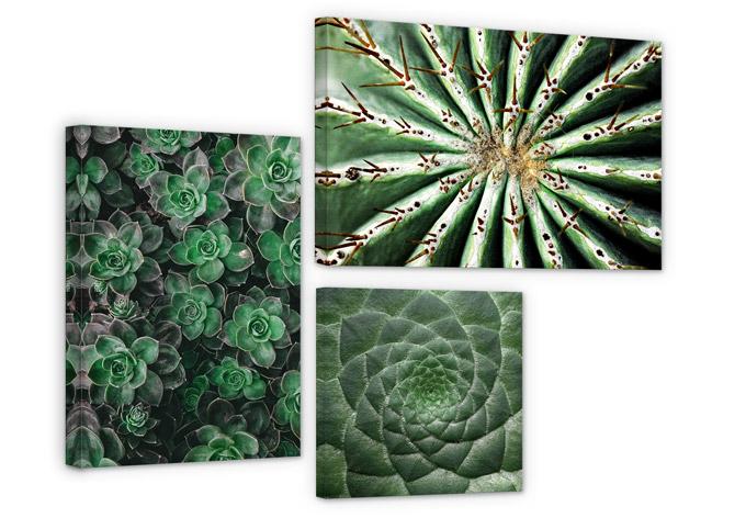 Succulent Canvas print (3 parts)