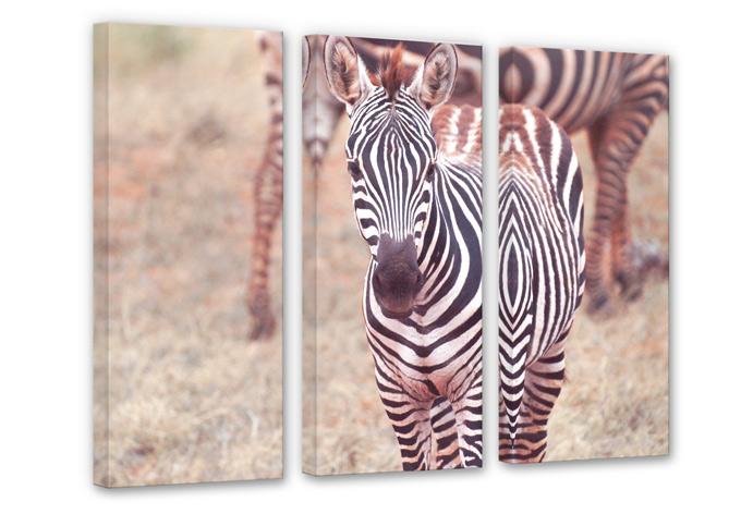 zebra foal 3 parts canvas print wall. Black Bedroom Furniture Sets. Home Design Ideas