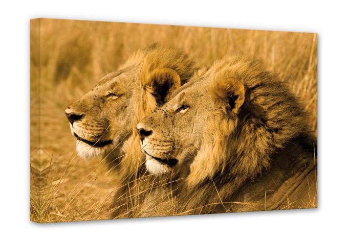 Leinwandbild NG Löwenpaar