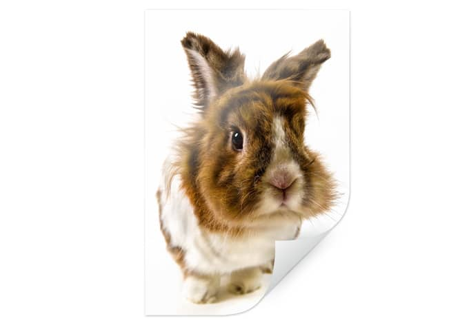 Poster rabbit wall - Tesa fensterfolie ...