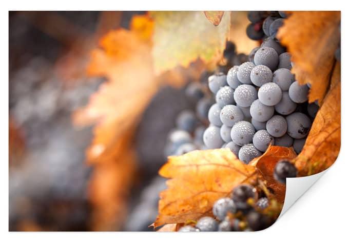 Poster wine autumn