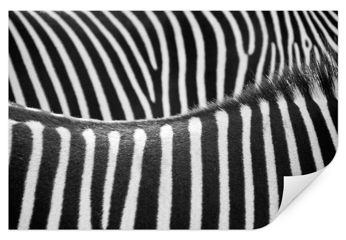 wallprint zebramuster sch nes streifenmuster als. Black Bedroom Furniture Sets. Home Design Ideas