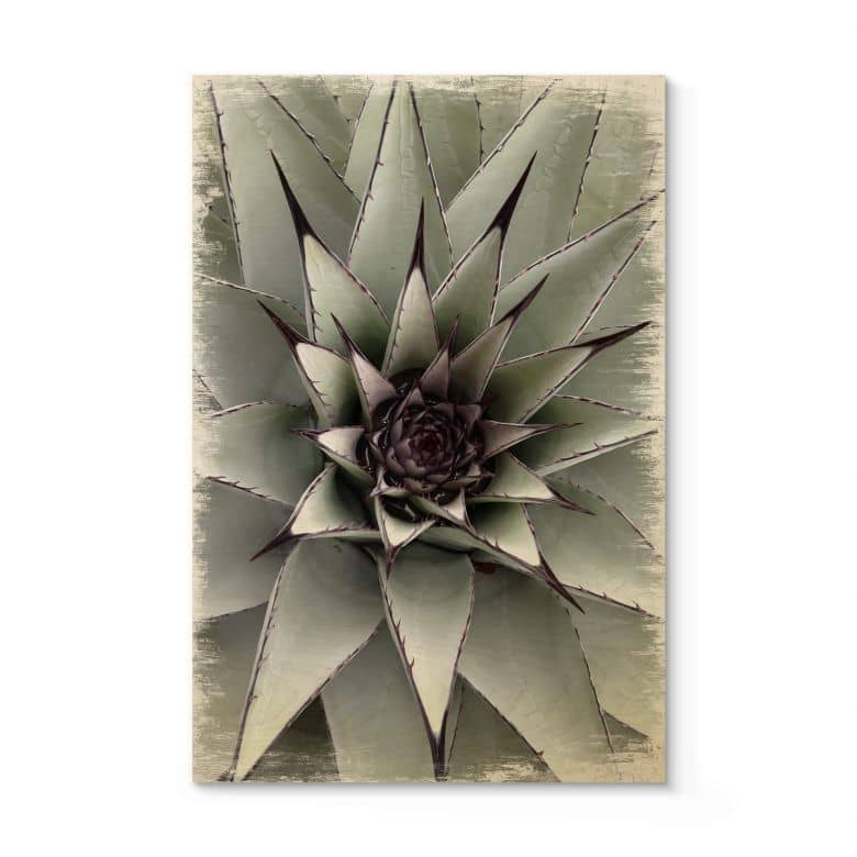 Holzposter Agave 01