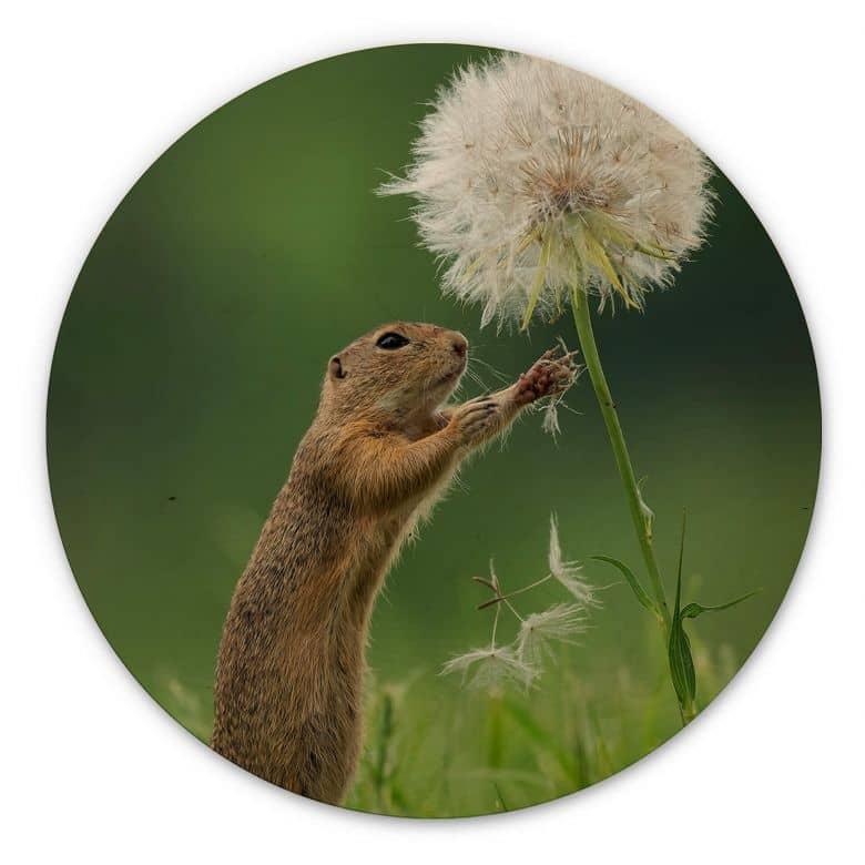 Wood picture Dick van Duijn - Squirrel with dandelion - round