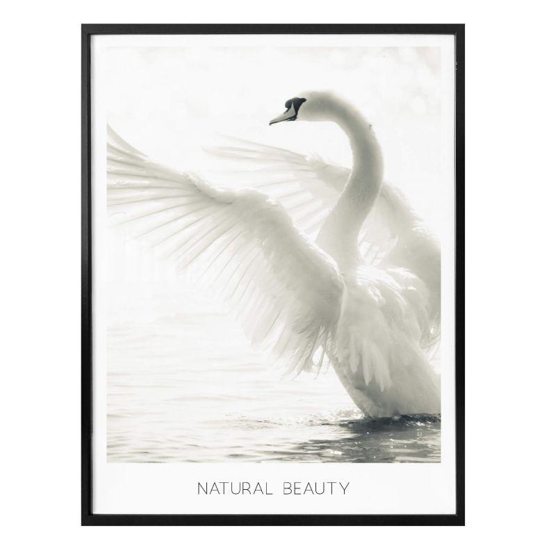 Poster Majestätischer Schwan - Natural Beauty