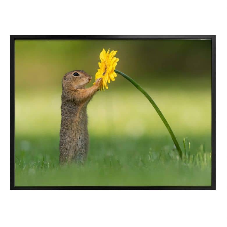 Poster Dick van Duijn - Squirrel holding flower