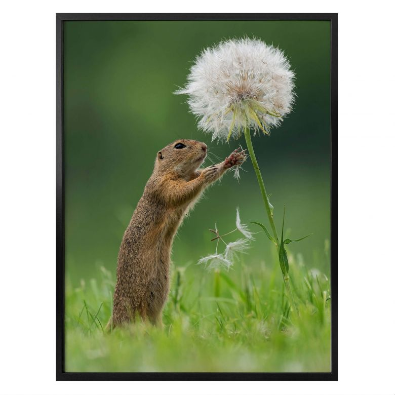 Poster Dick van Duijn - Squirrel with dandelion