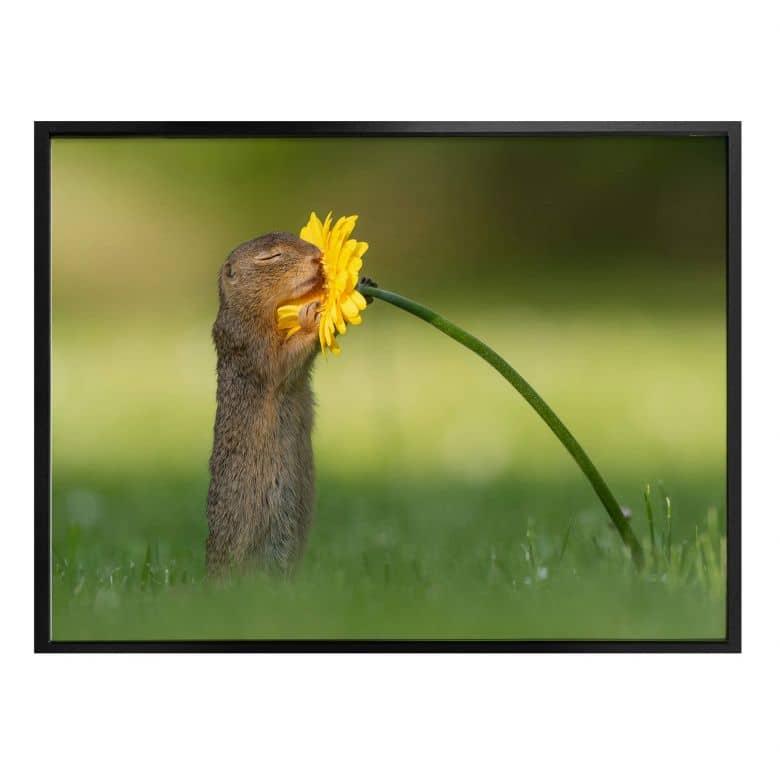 Affiche van Duijn - Un petit écureuil sentant une fleur