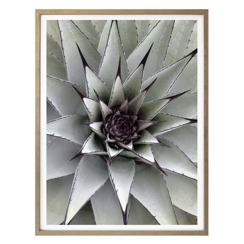 Affiche - Agave 01