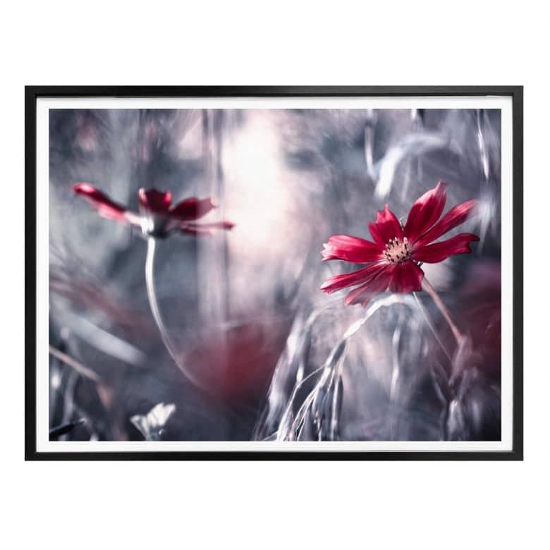 Poster Bravin - Blütenrausch