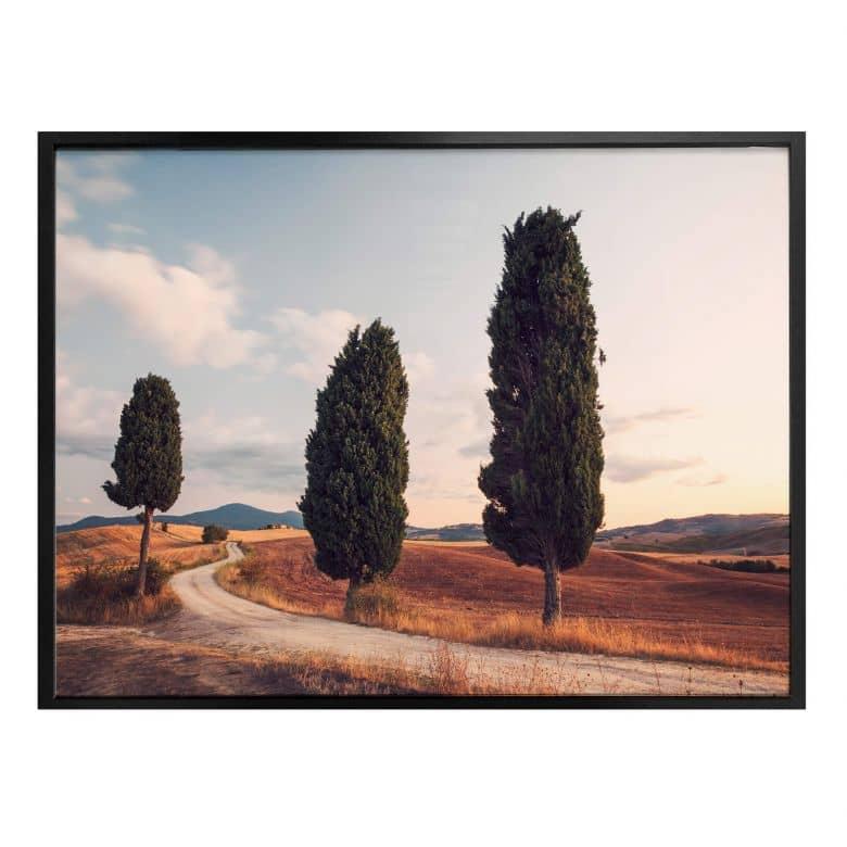 Poster Colombo - Drei Zypressen am Weg