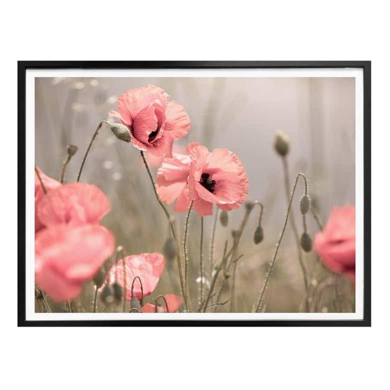 Poster Delgado - Fleur de coquelicot romantique