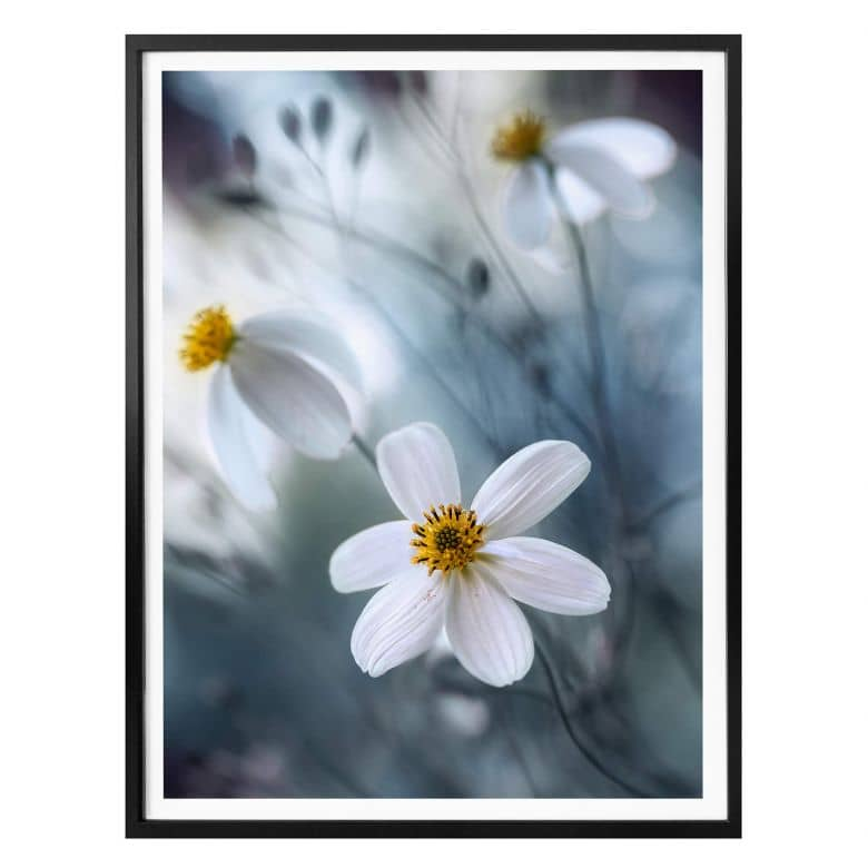 Poster Disher - Fleurs blanches