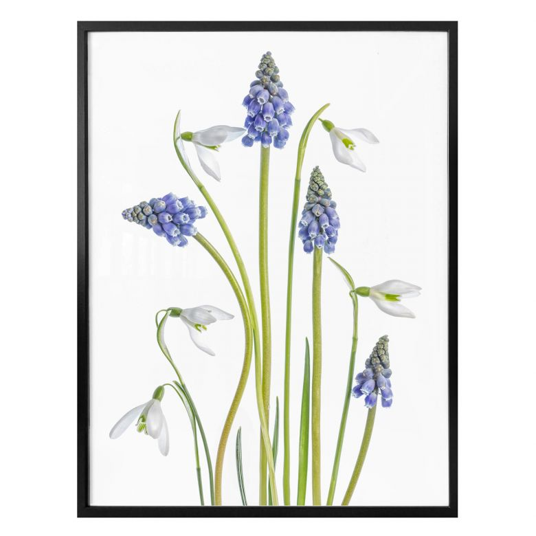 Poster Disher - Spring Flowers