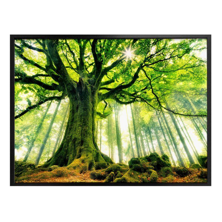Poster - Kiciak - Forêt enchantée