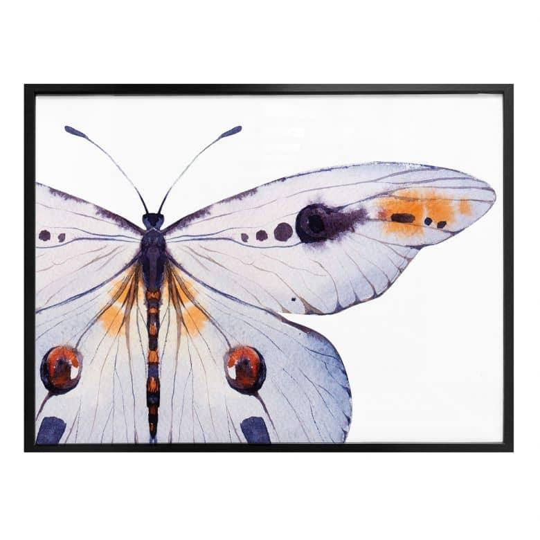 Poster Kvilis - Schmetterling 01