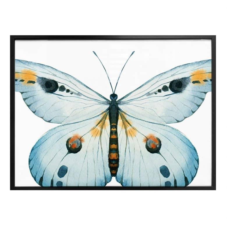 Poster Kvilis - Schmetterling 03