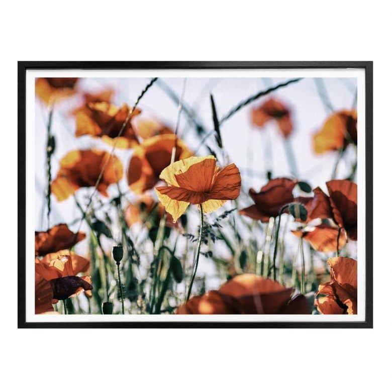 Poster Mohnblumen auf dem Feld