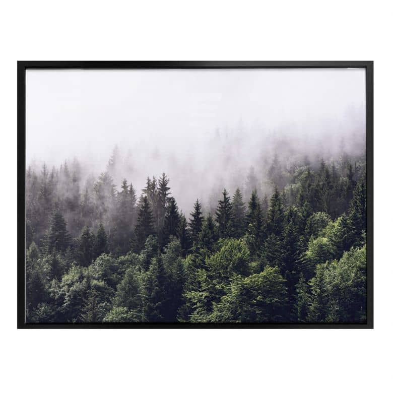 Poster Foggy Forest