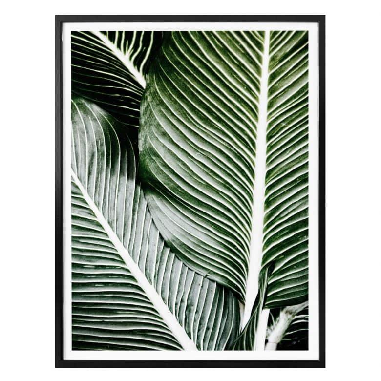 Affiche feuilles de palmier