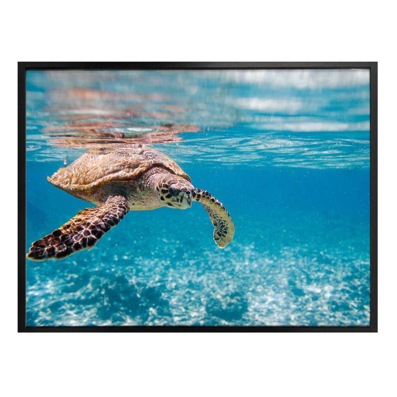 Poster Schildkröte auf Reisen