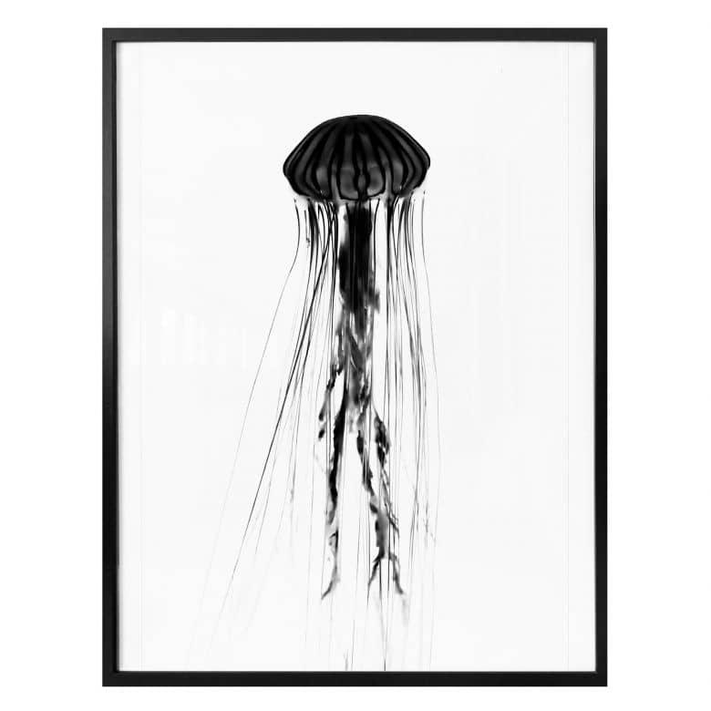 Poster - Méduse noire