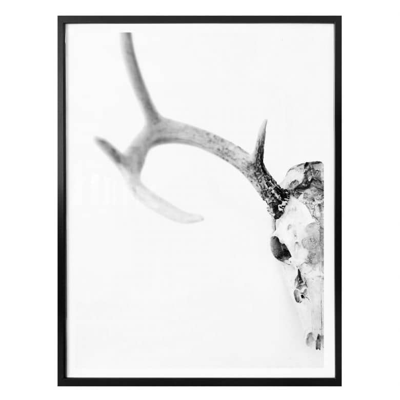 Affiche crâne de cerf