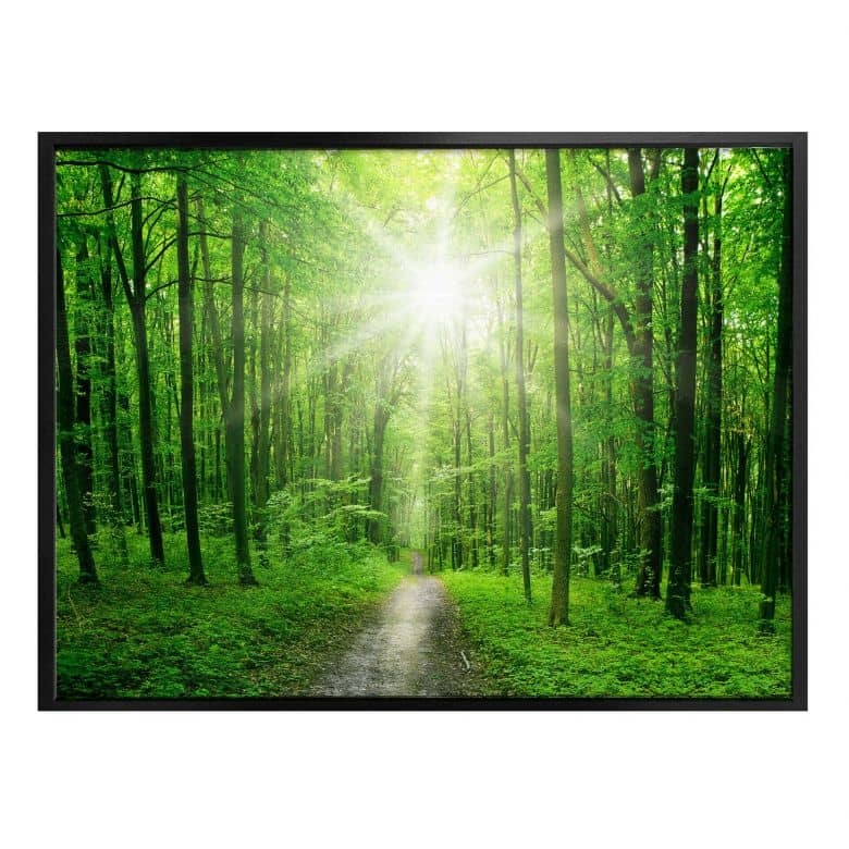 Poster Sunny Forest