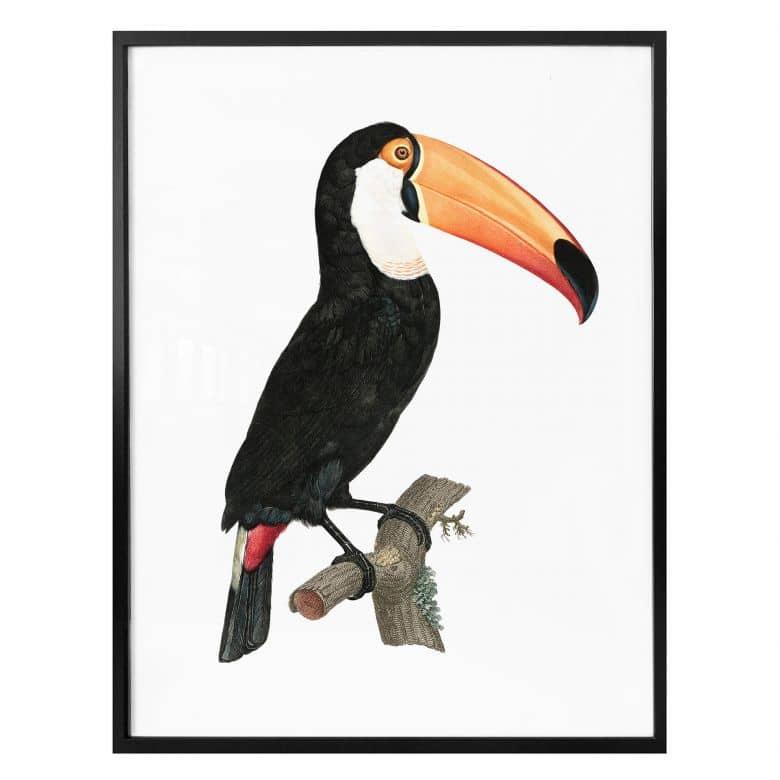Poster Tukan auf einem Ast