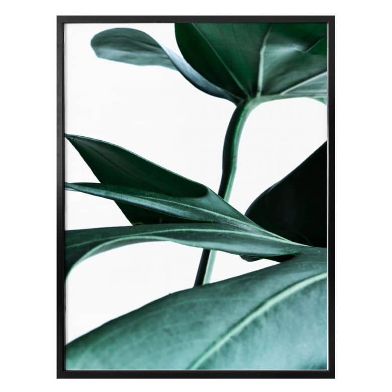 Poster - Urban Jungle - Monstera Deliciosa
