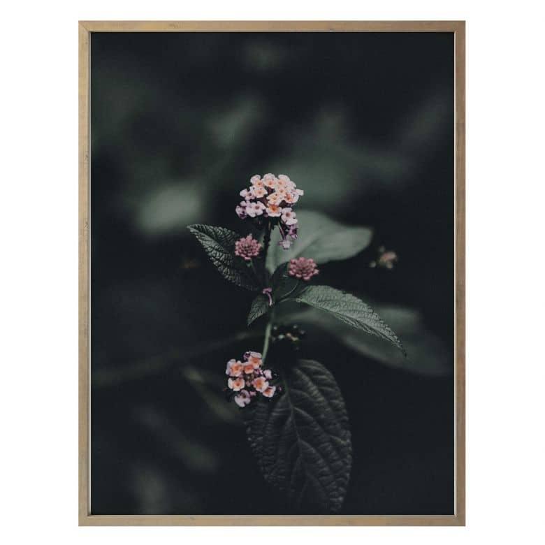 Poster Zarte rosa Blüte