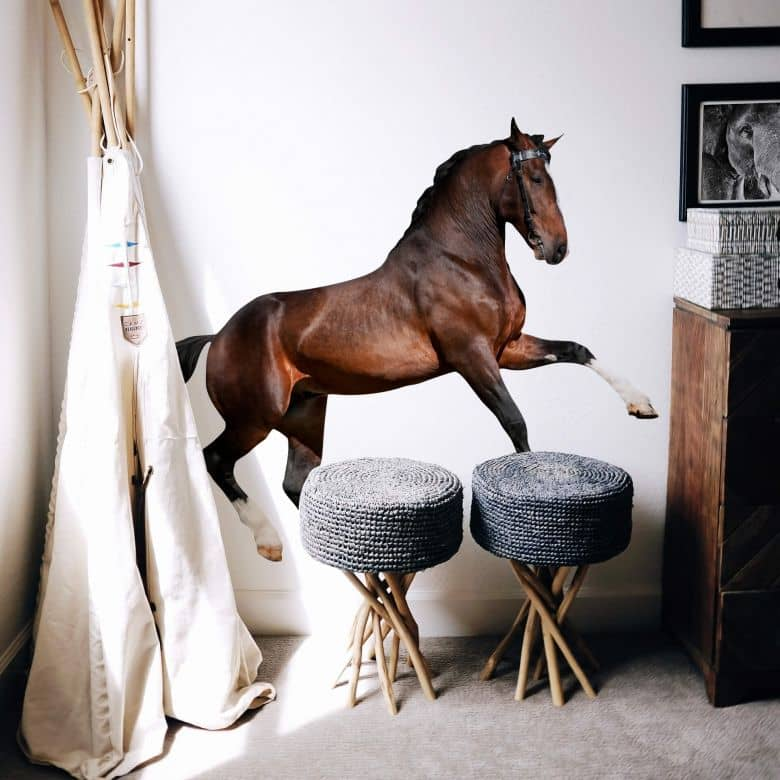 Adesivo murale - Cavallo realistico in azione