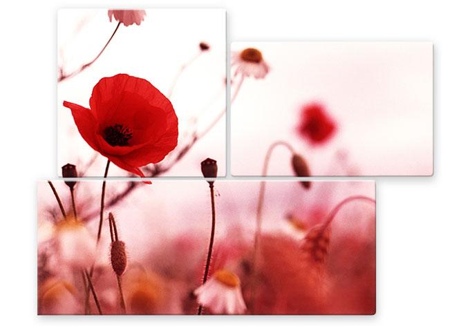 Glasbild Mohn Impressionen (3-teilig)