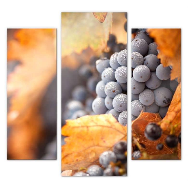 Acrylglasbild Wein im Herbst (3-teilig)