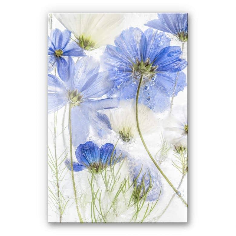 Acrylglasbild Disher - Blue Frozen