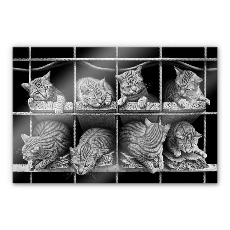 Acrylglasbild Heine - Die Katze