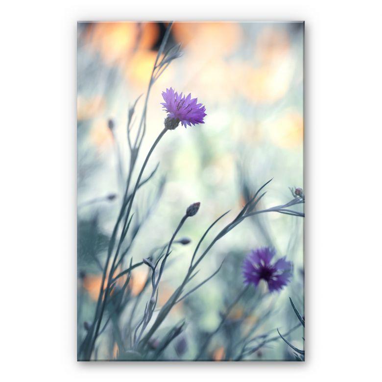 Acrylglasbild Bravin - Luminous purple