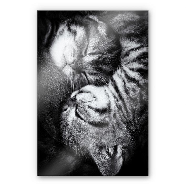 Acrylglasbild Jancova - Sweet Kitten