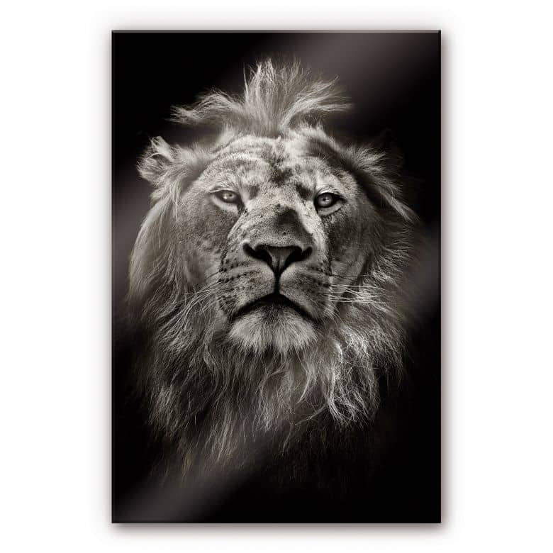 Lion XXL Wall picture