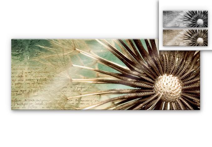 Acrylic glass Blowballs-Poetry - Panorama