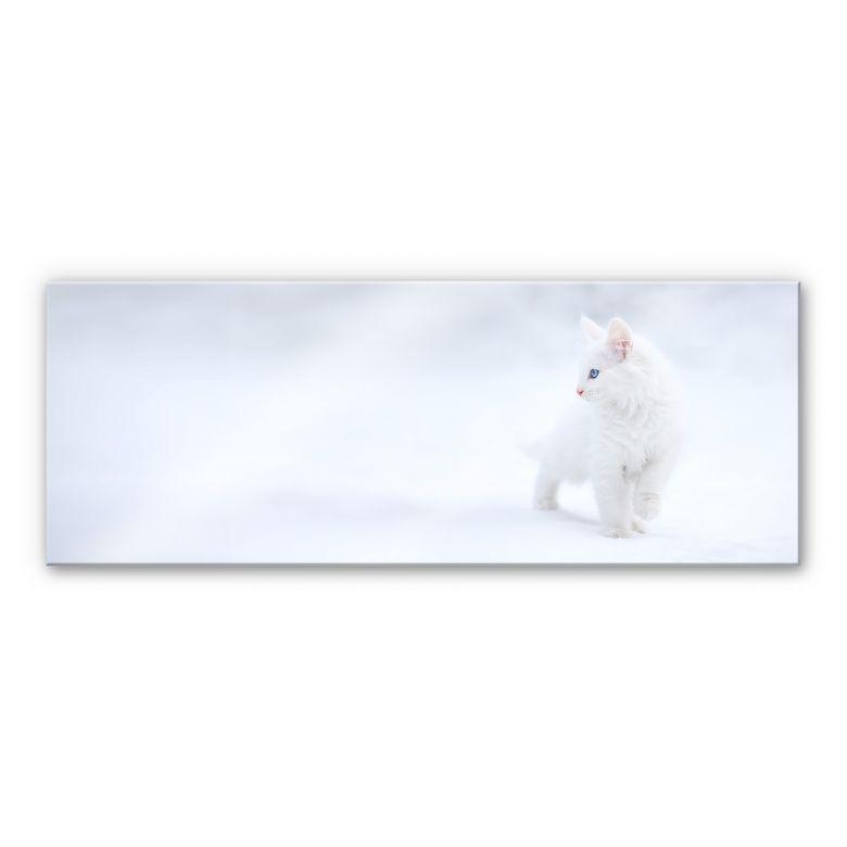 Acrylglasbild Prexus - Weißer als Schnee