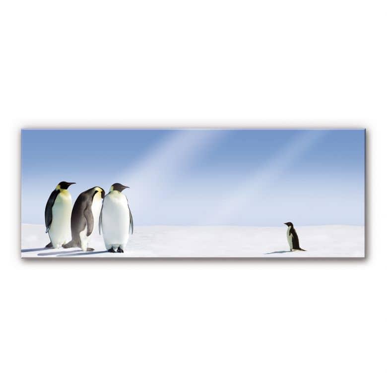 Acrylglas Pinguins