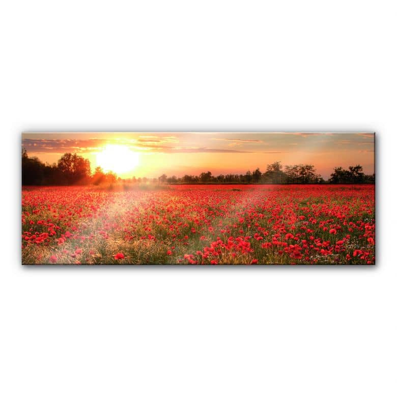 Acrylic glass Poppyfield in the Sunset - Panorama