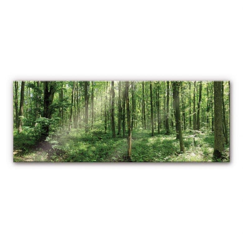 Tableau en verre acrylique - Panorama Forêt 01