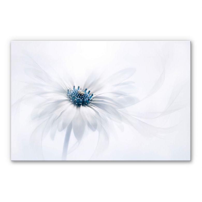 Acrylic glass picture Parker - Frozen Flower