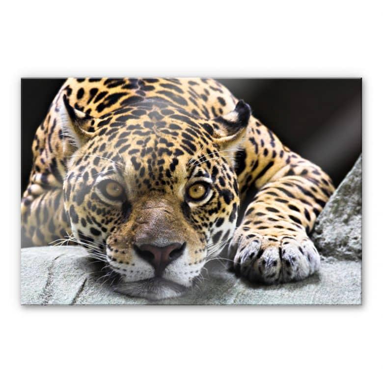 Acrylic glass Jaguar