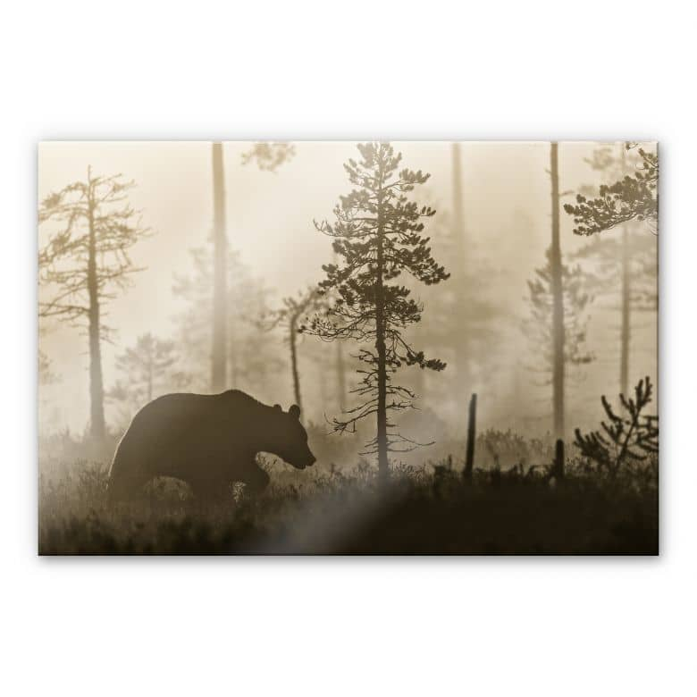 Acrylglasbild Ove Linde - Nebel am Morgen